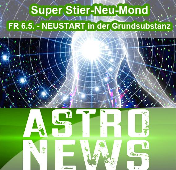 """SUPER Stier-Neumond FR 6.5. """"neue Substanz"""""""